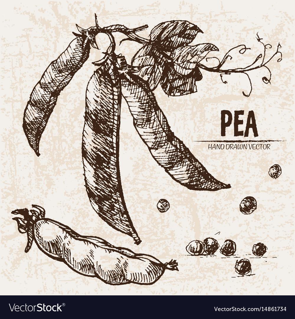 Digital detailed line art pea