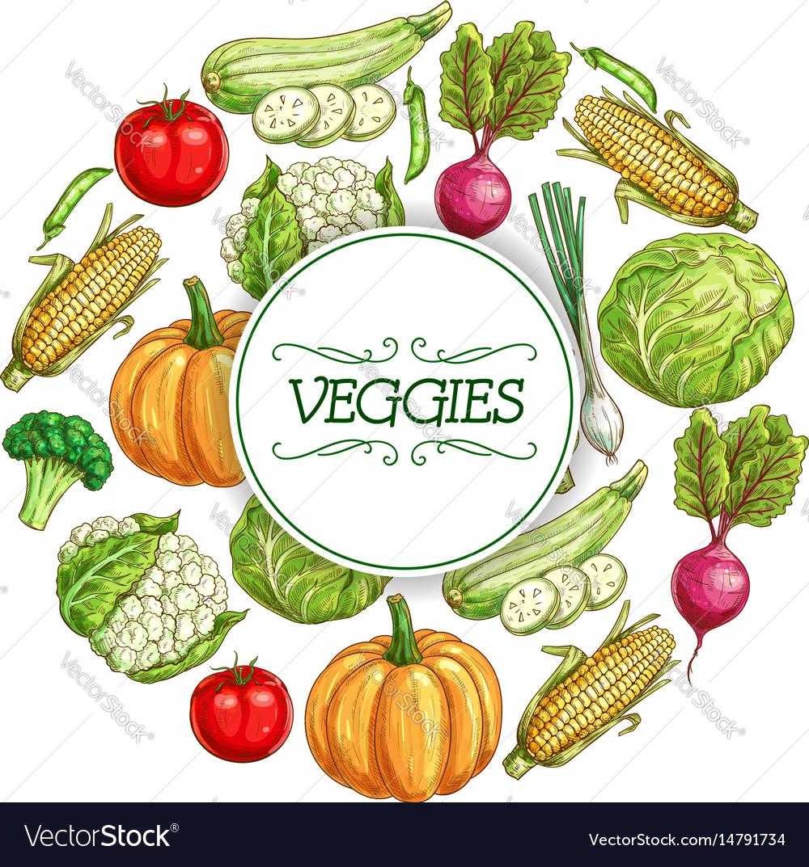 Vegetables sketch poster for food label design