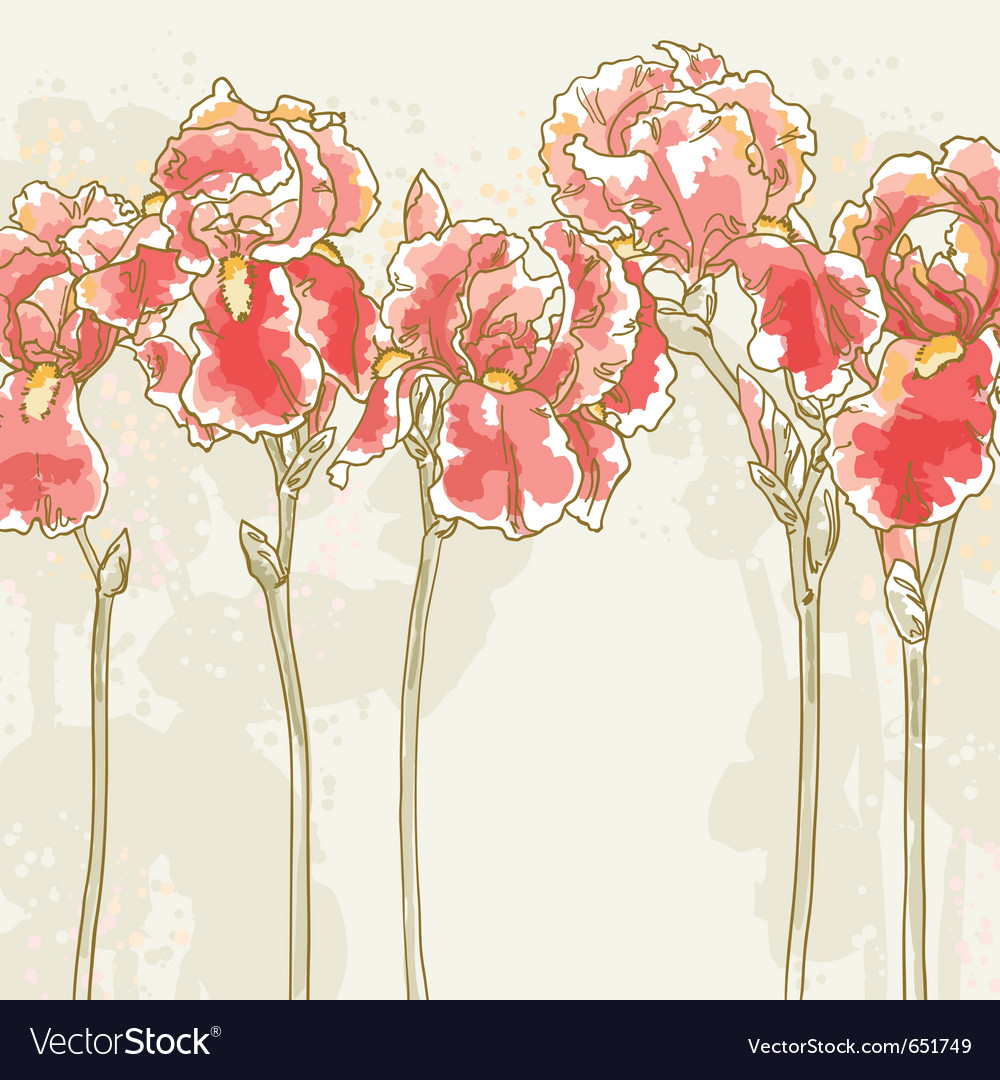 Background with red iris flowers royalty free vector image background with red iris flowers vector image izmirmasajfo