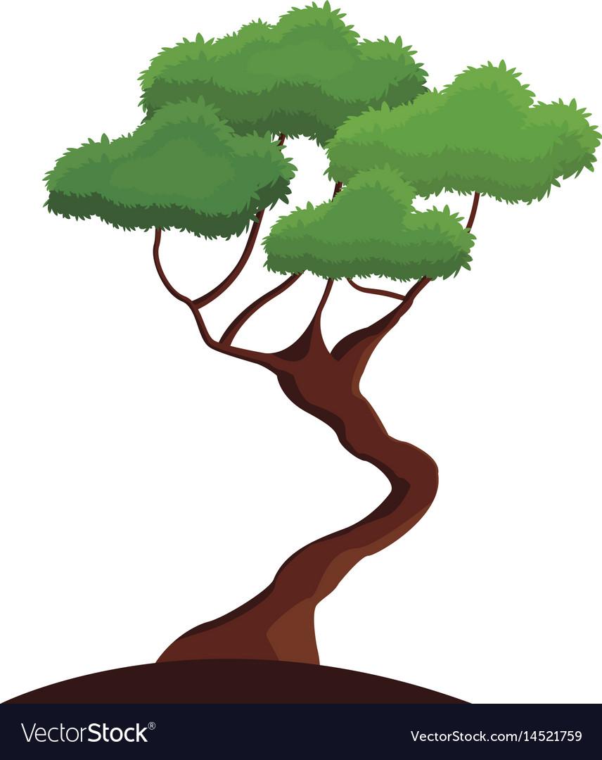 Bonsay tree oriental season nature branch vector image