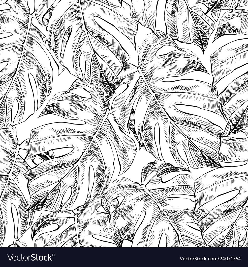 Monstera leaves hand drawn seamless pattern