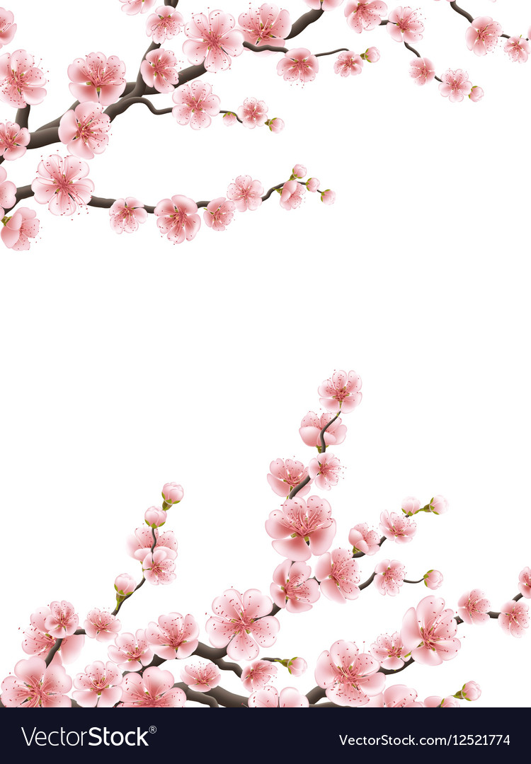 Wedding card with gentle sakura flowers EPS 10 vector image