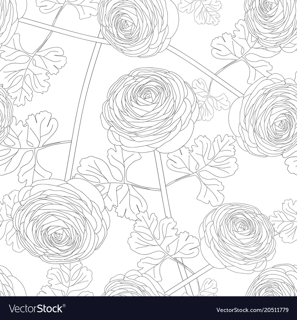 Ranunculus flower on white background royalty free vector ranunculus flower on white background vector image mightylinksfo