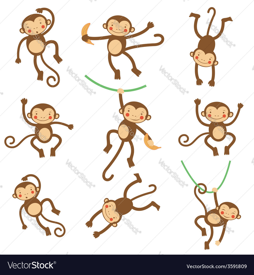 Cute funny monkeys
