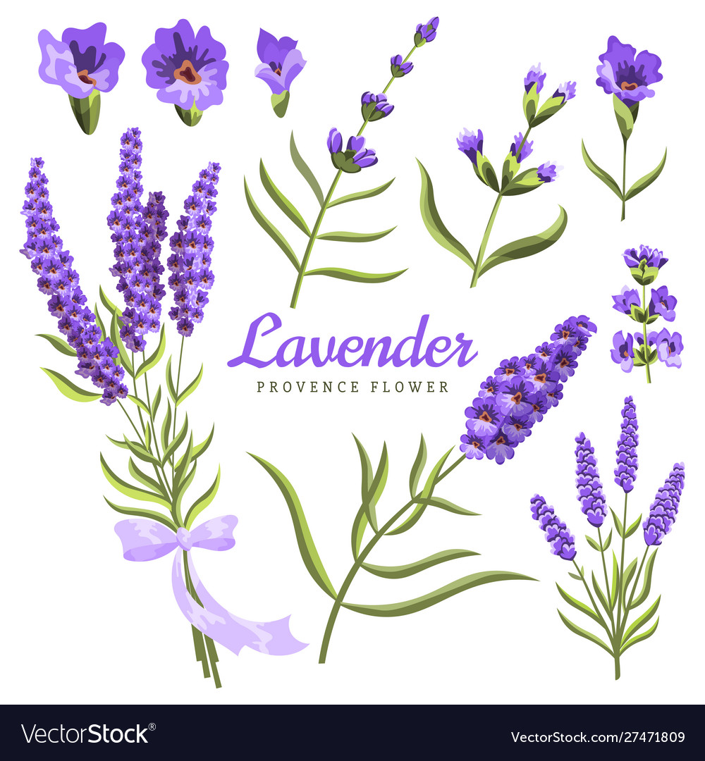 Lavender set watercolor lavender flowers and
