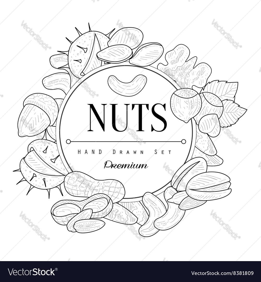 Nuts Collection Vintage Sketch
