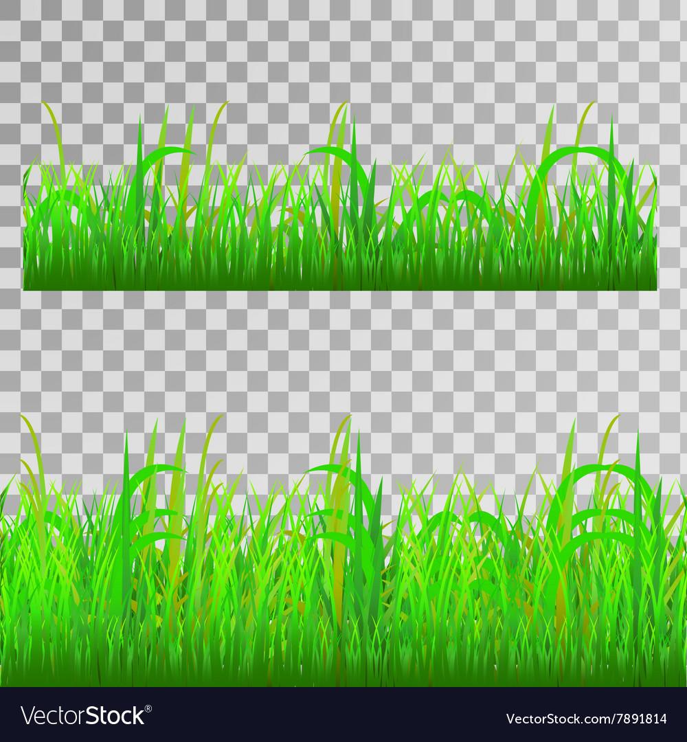 Green grass seamless