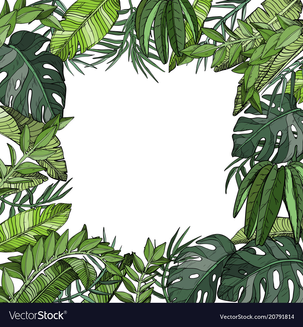 Tropical palm leaves background jungle plants vector image