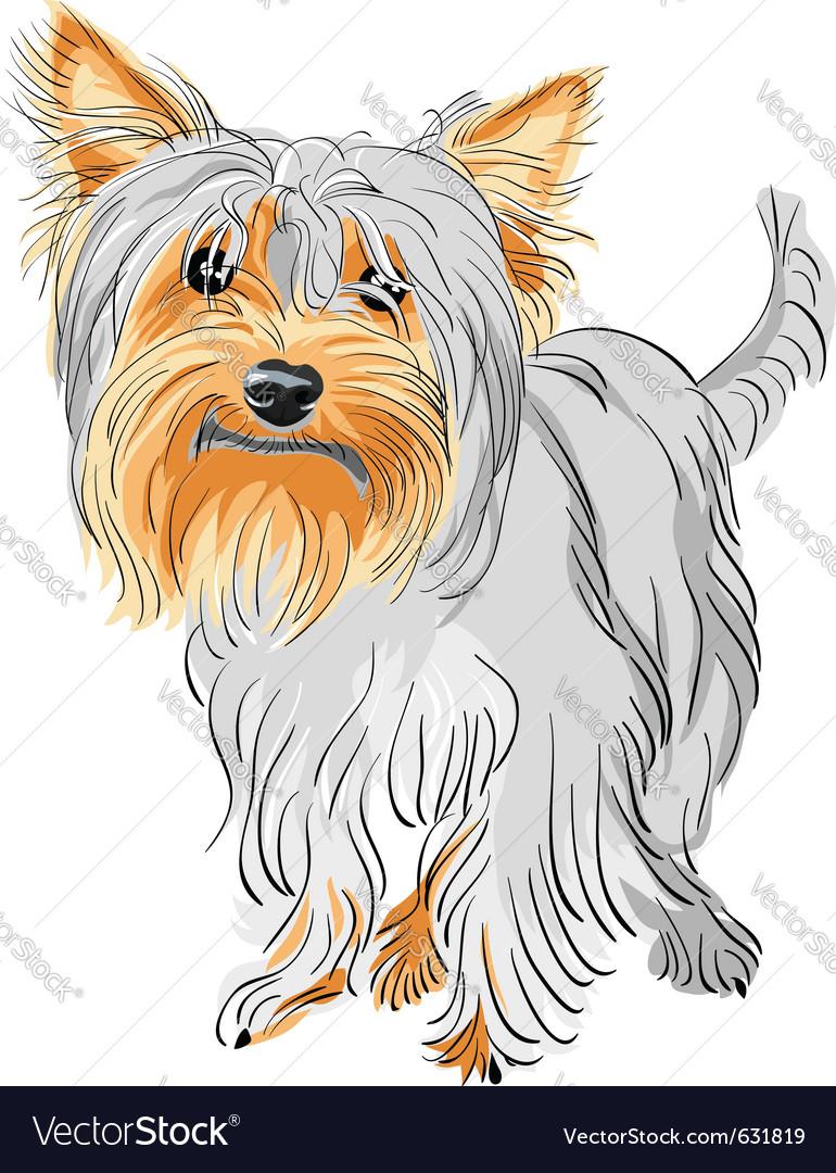 Yorkshire terrier sketch