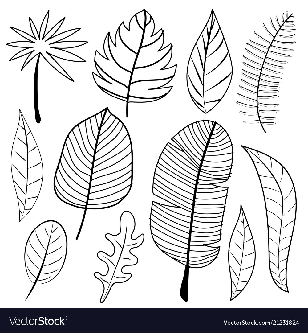 Leaves Doodle Set Royalty Free Vector Image Vectorstock