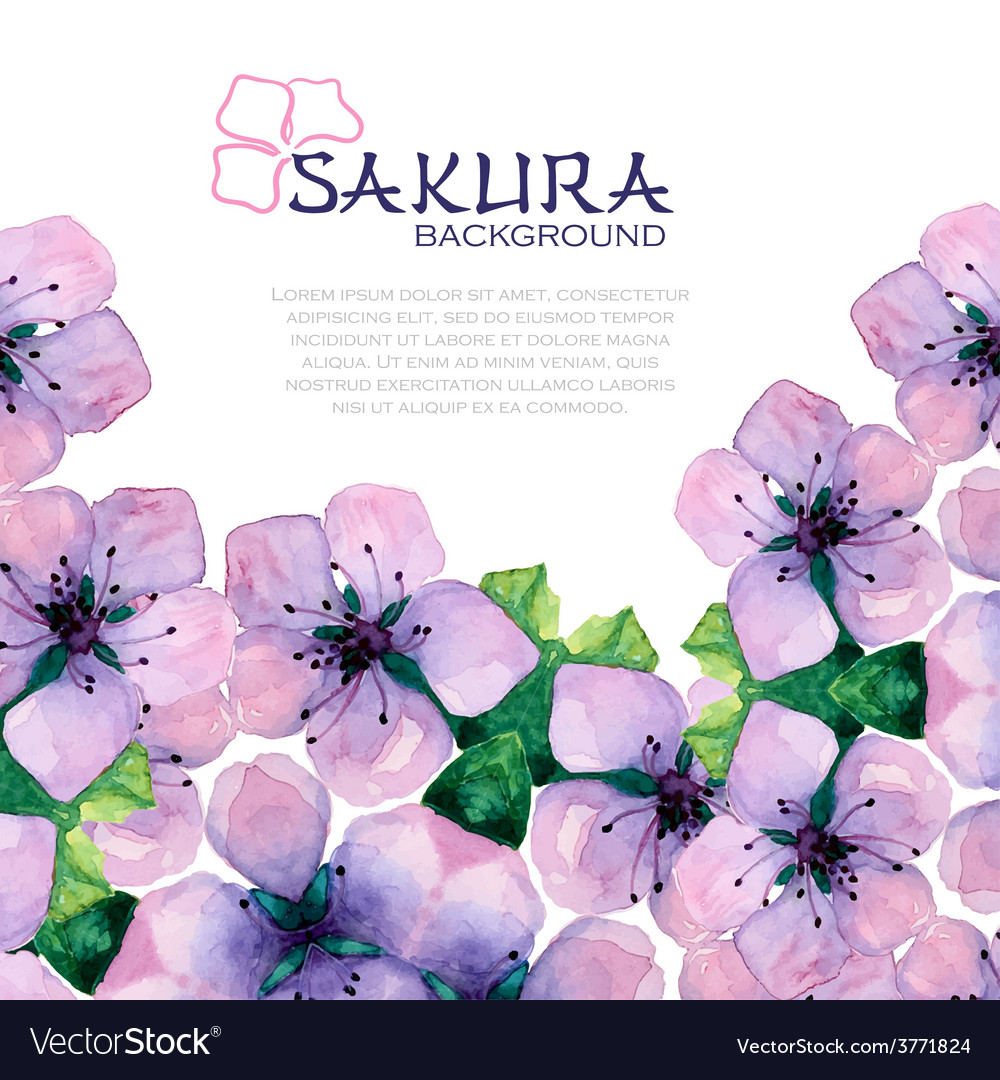 Watercolor elegant background with japanese sakura vector image