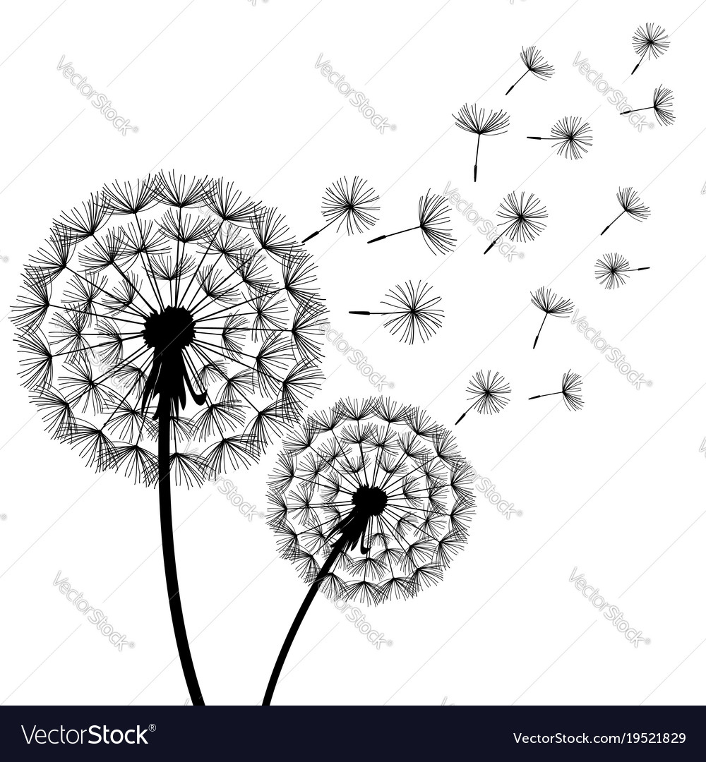 Dandelion Blowing Black White Royalty Free Vector Image