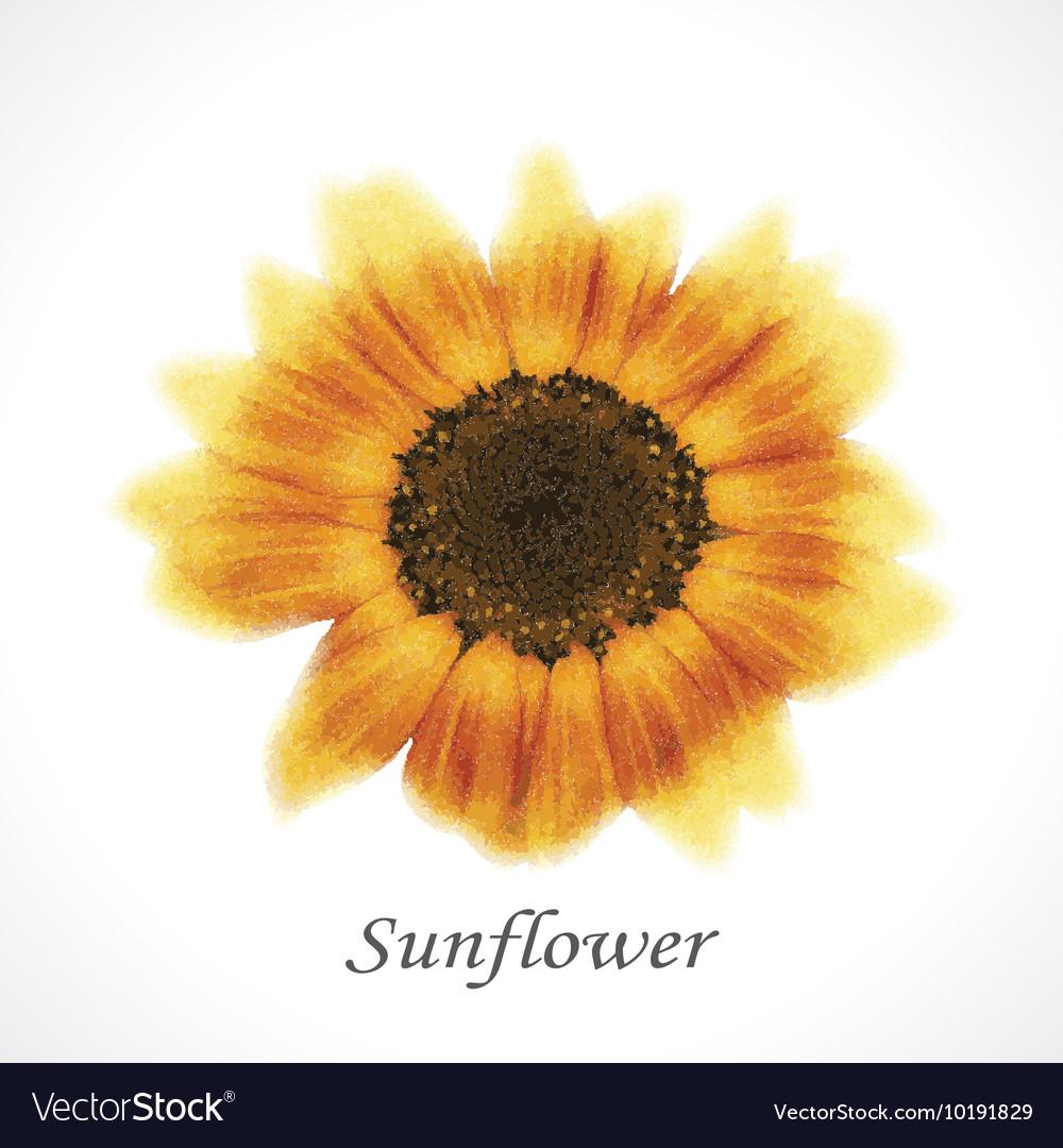 Flower sunflower vector image