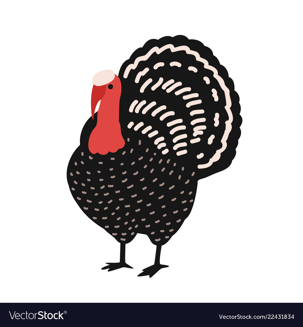 Adorable turkey isolated on white background vector