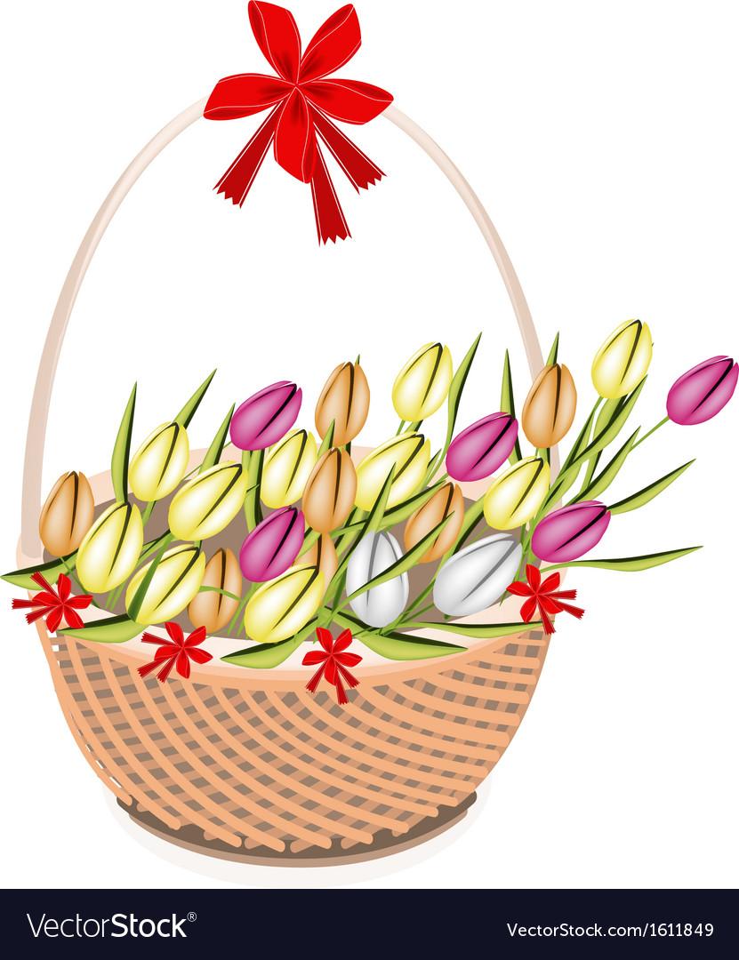 A brown basket beautiful fresh tulip