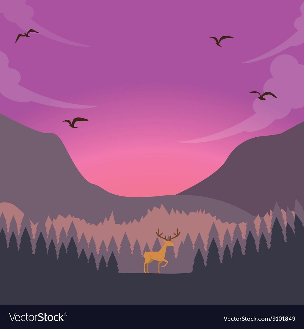 Nature scene deer on sunset sunrise in forest