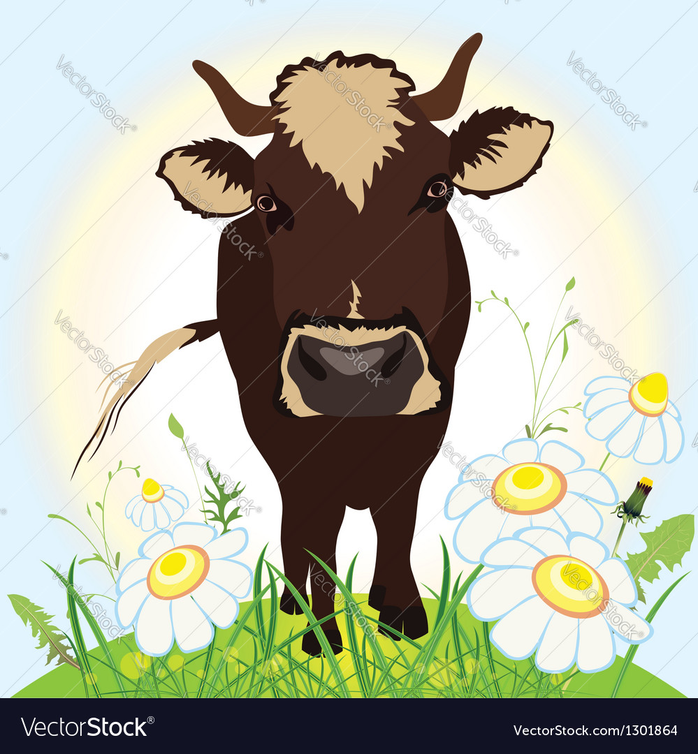 Cow on green field grass and flowers
