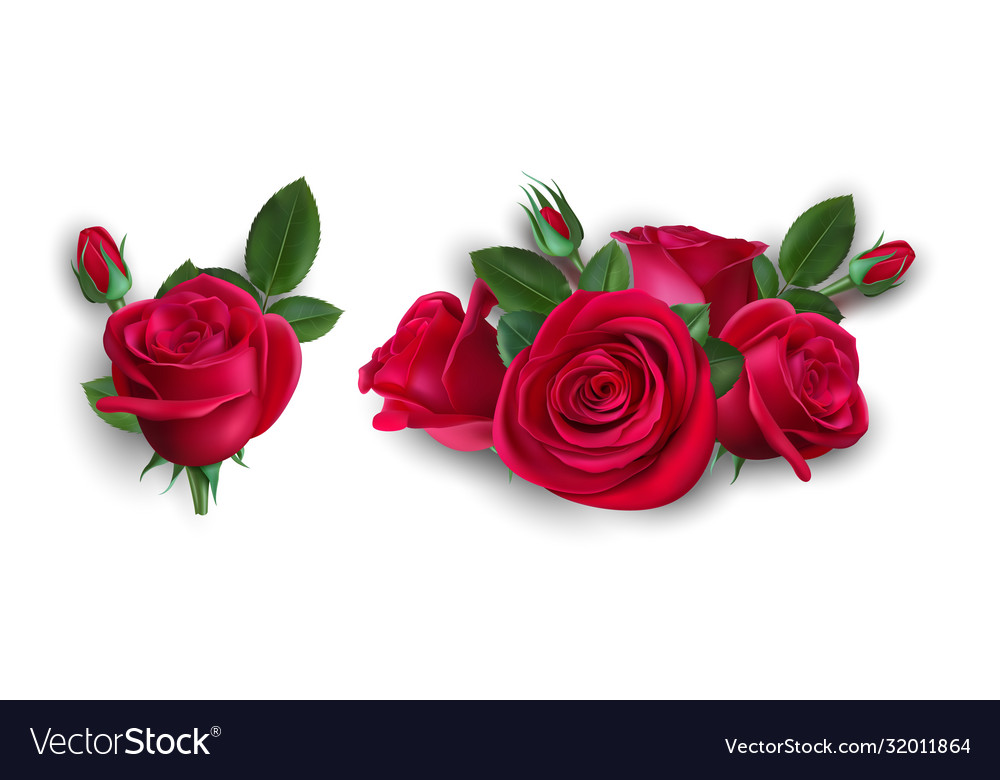Realistic bouquet roses isolated red rose