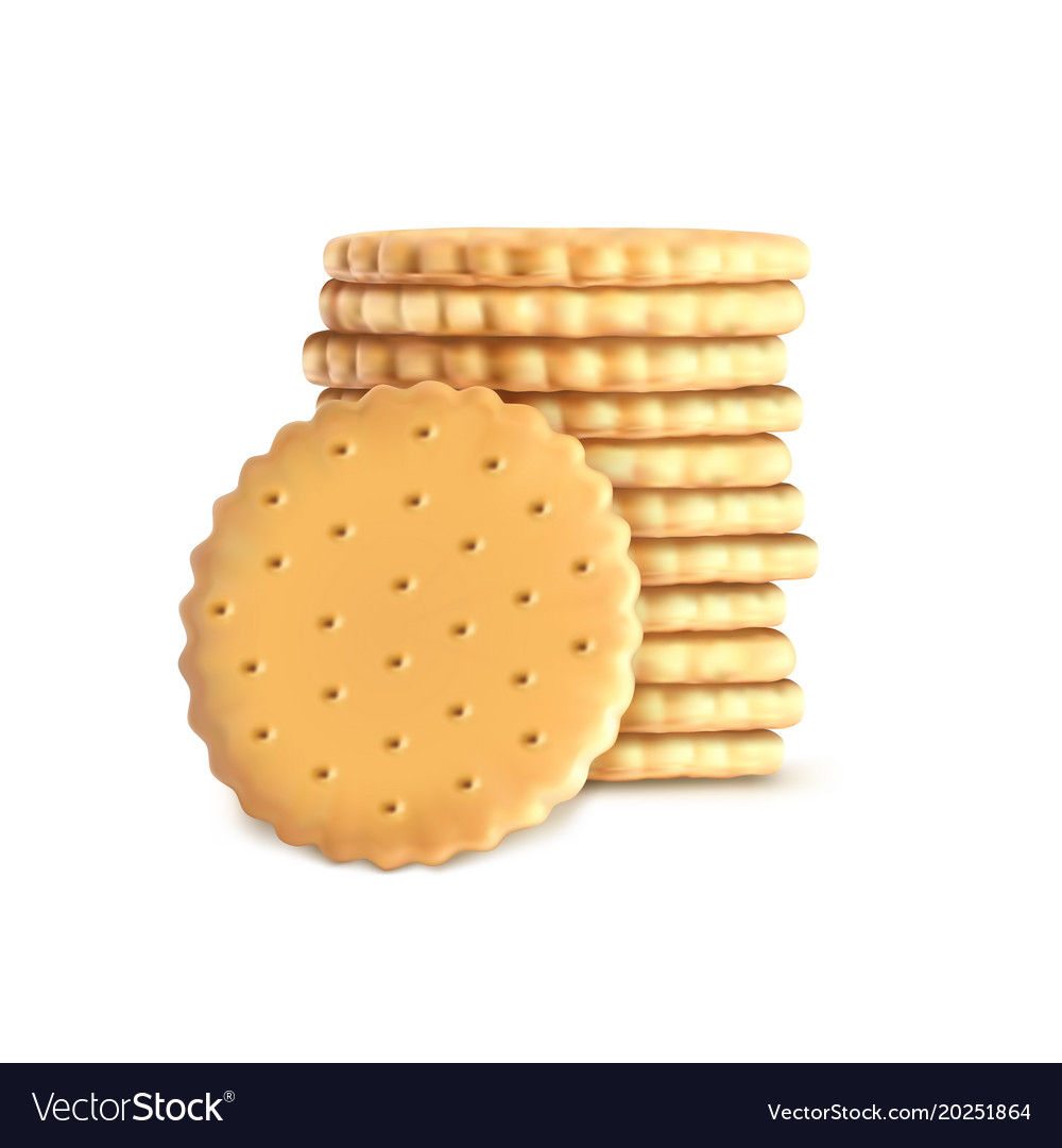 stack of round biscuit cookies template royalty free vector vectorstock