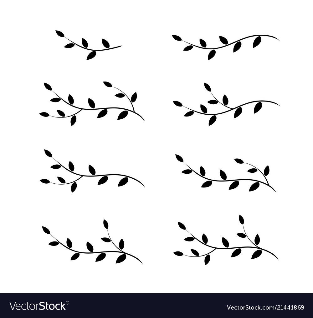 Isolated tree branches with leaves