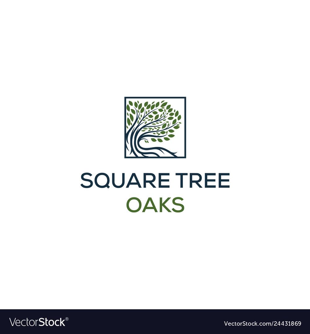 Oaks logo designs in square symbol