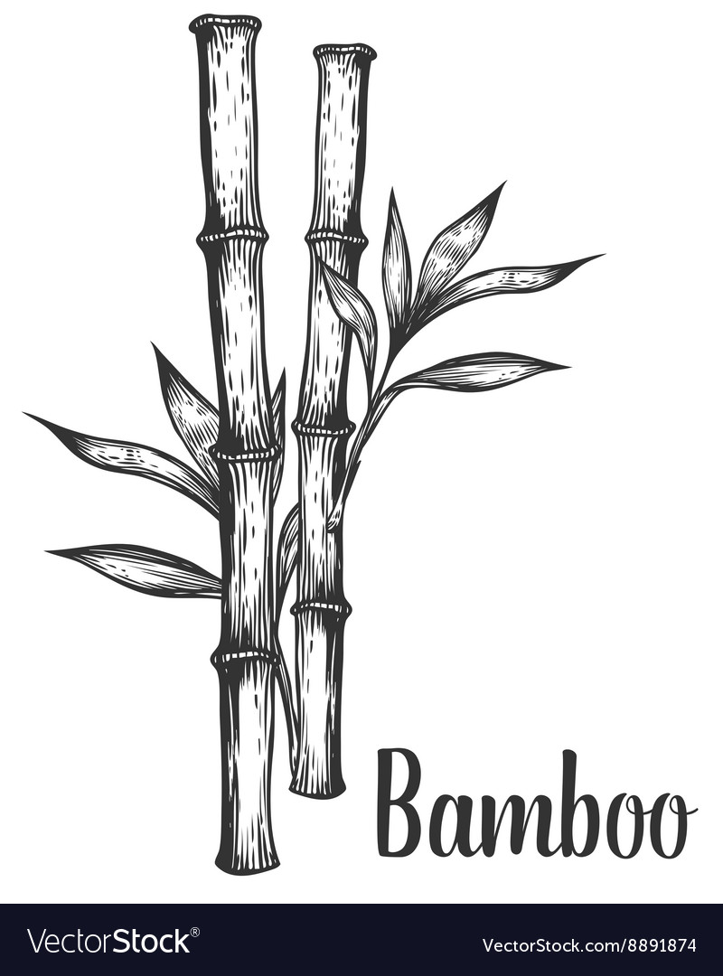 Bamboo stem branches and leaf hand drawn vector image