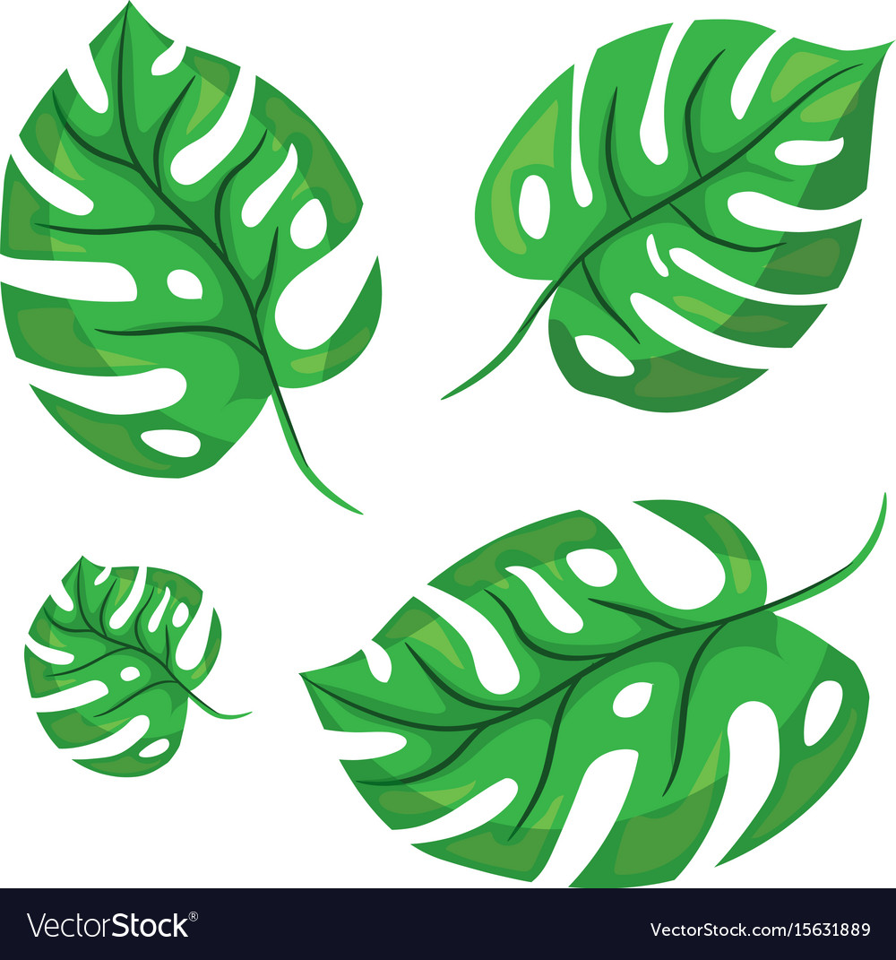 cartoon tropical monstera leaves royalty free vector image rh vectorstock com cartoon leaves png cartoon leaves background