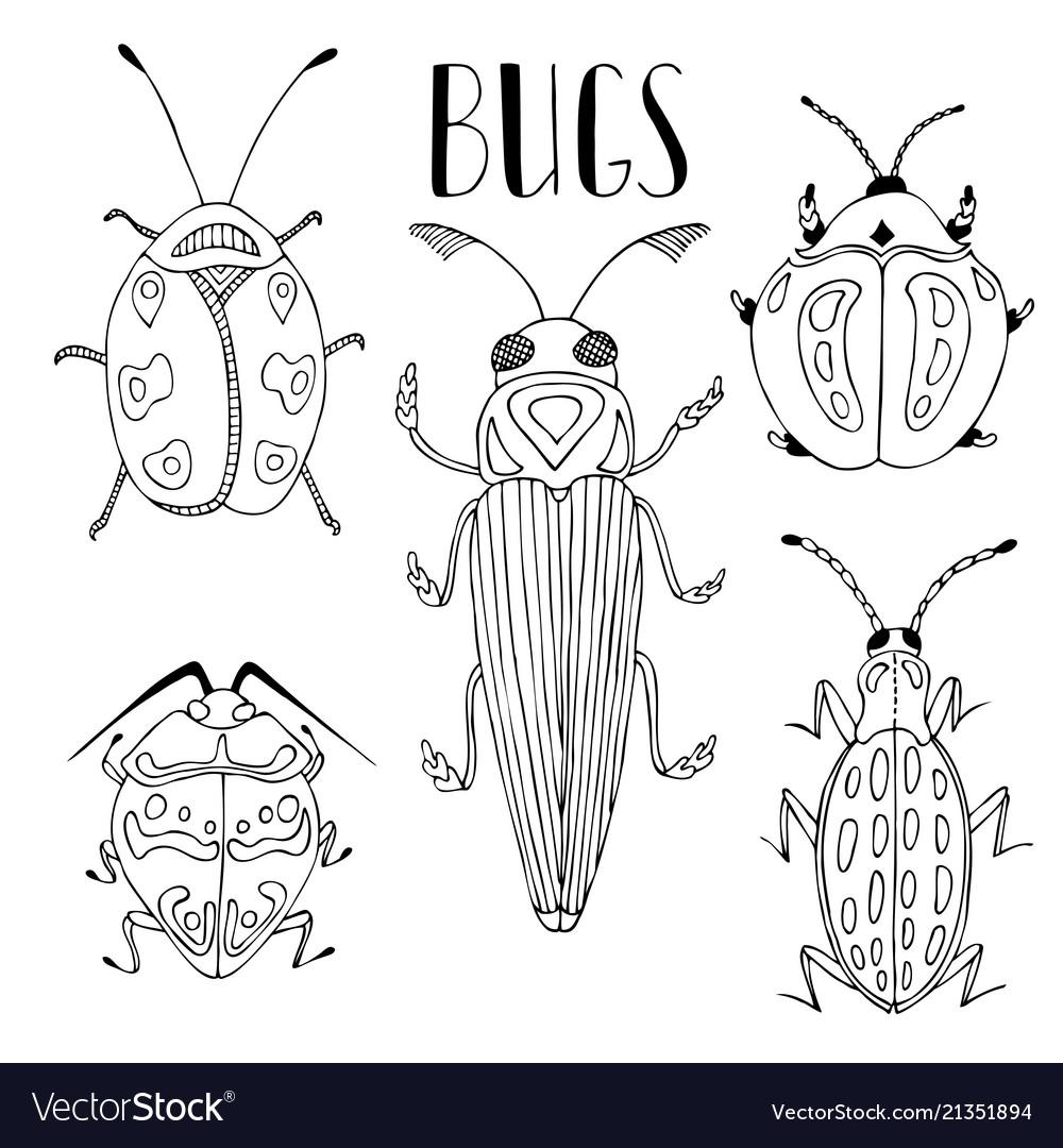 Beetle collection beetles and bugs