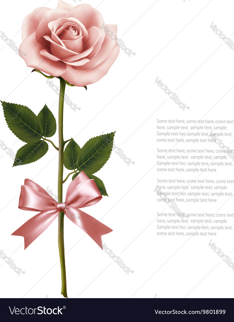 Single pink rose with bow isolated on white