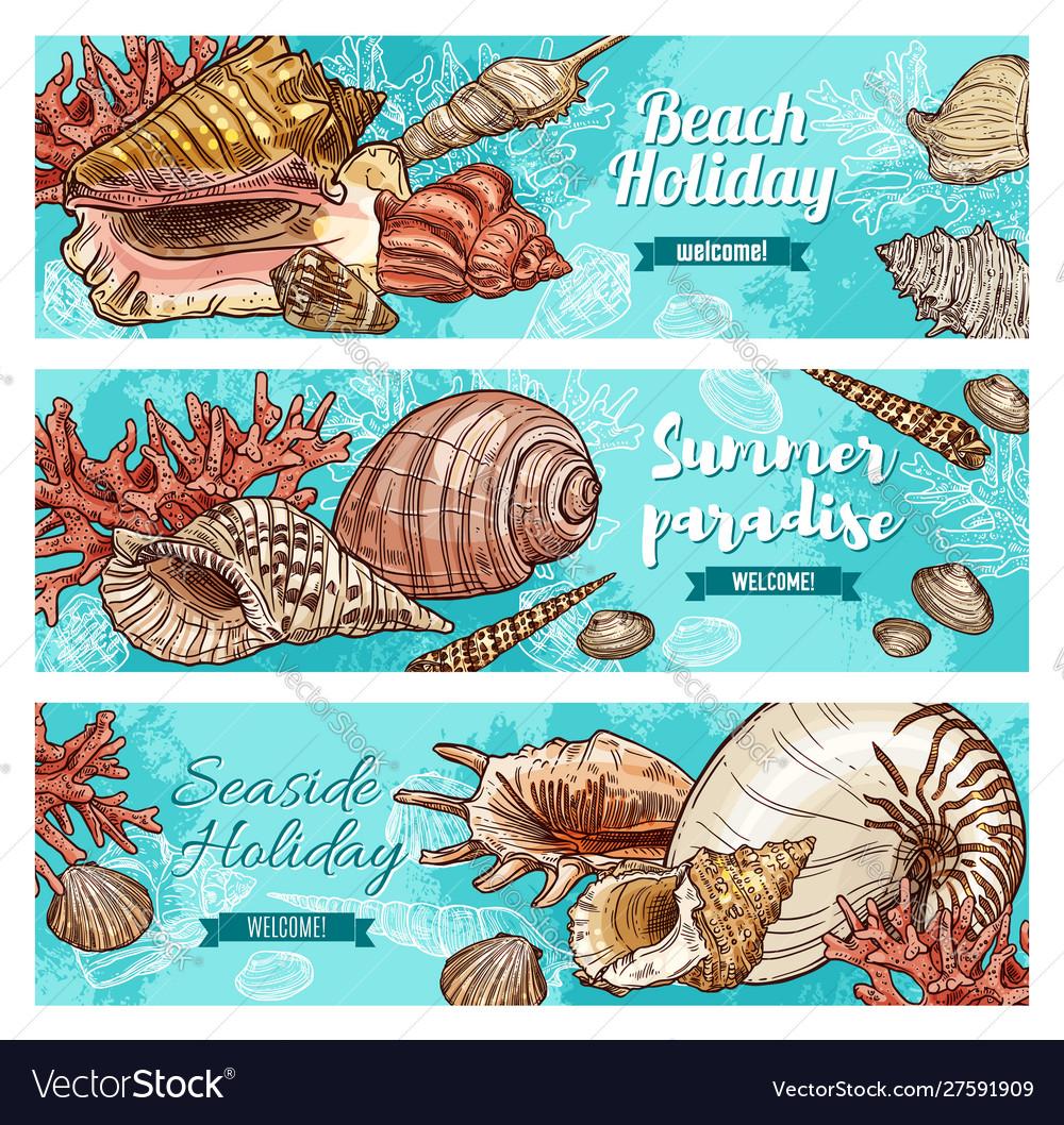 Summer beach shells corals and mollusks