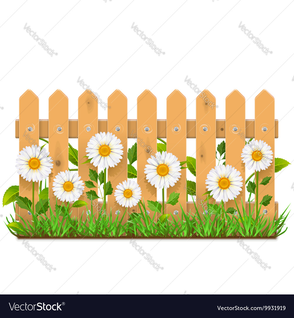 Wooden Fence with Camomiles vector image