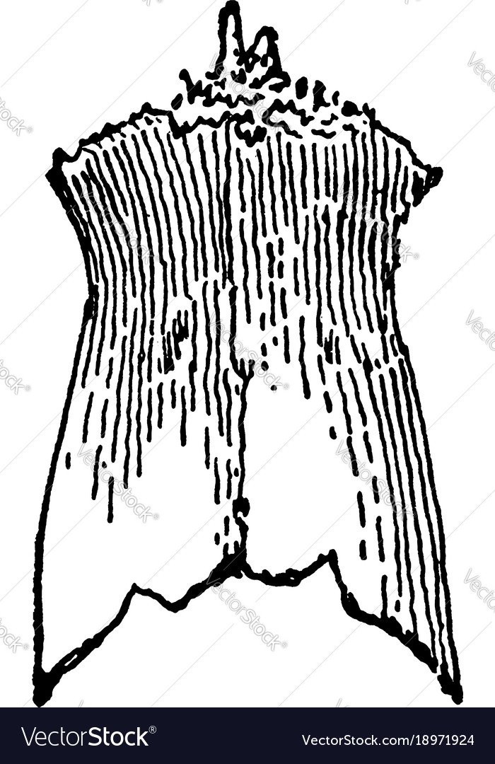 Nasal Bone Vector Images 45