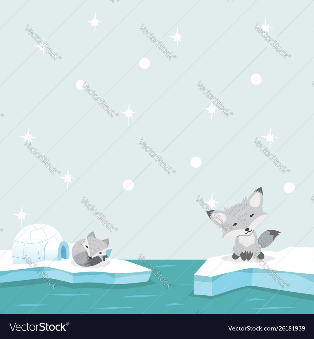 White fox north pole arctic in ocean