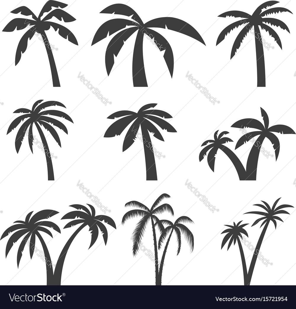 Set palm tree icons isolated on white
