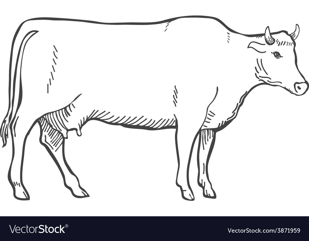 Hand Draw Cow Outline