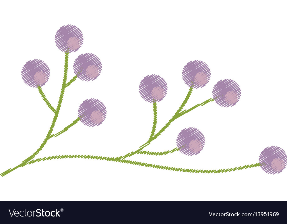 Branch flower wild image sketch vector image