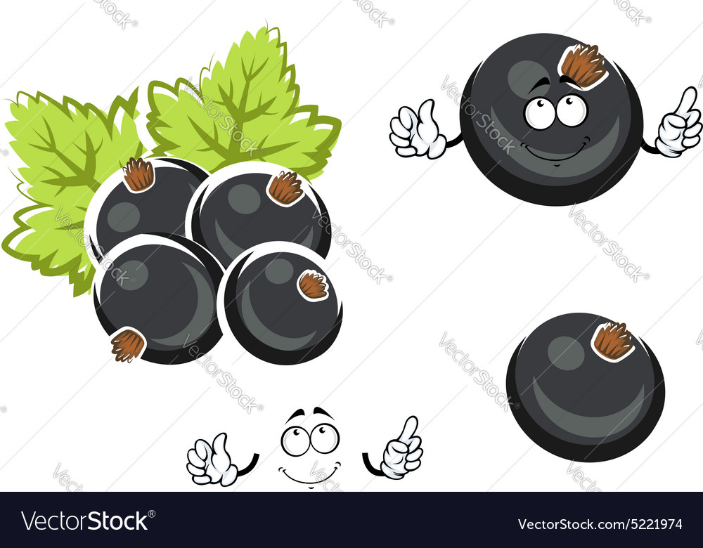 Black currant berry cartoon character vector image