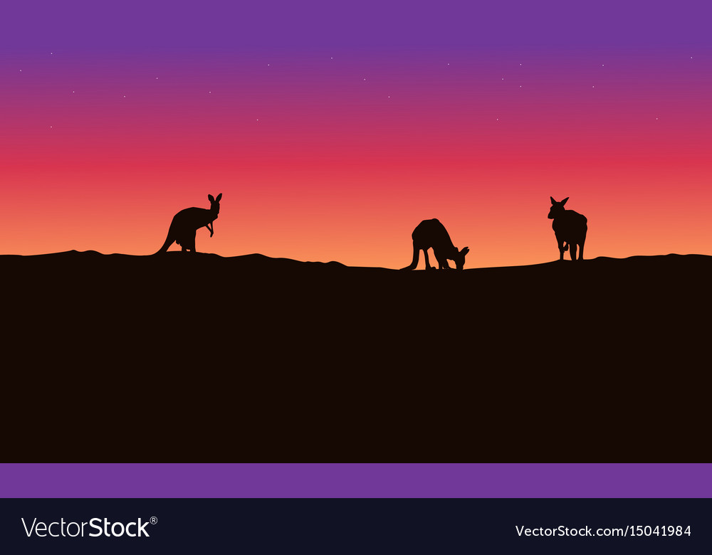 Silhouette landscape kangaroo with beauty sky