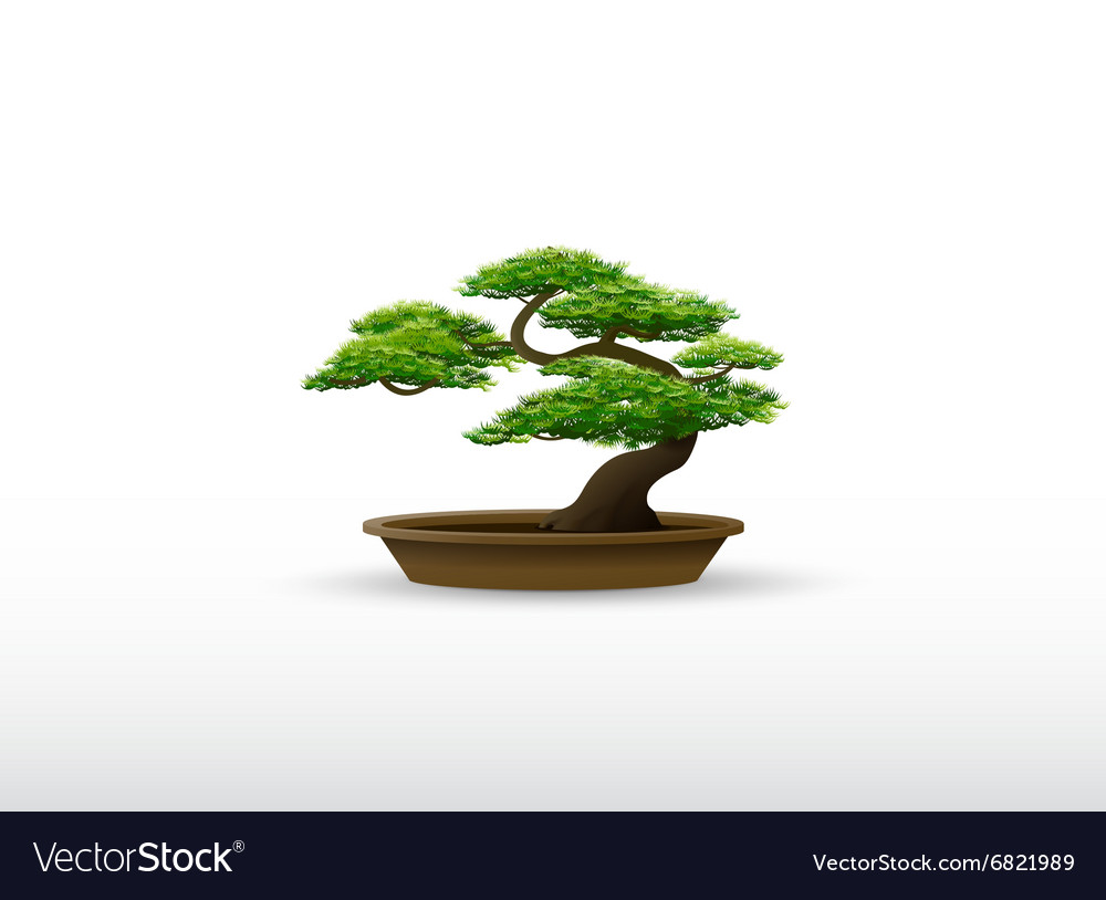 Bonsai plant Royalty Free Vector Image - VectorStock