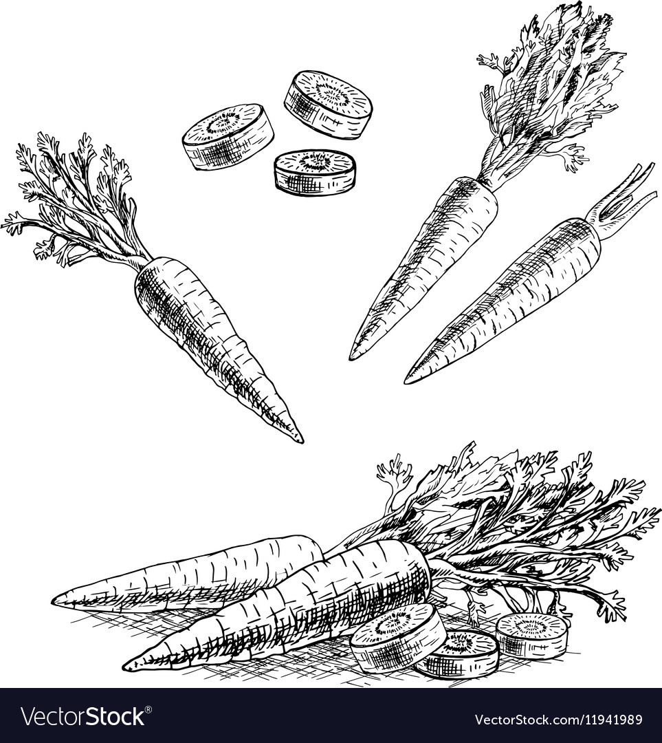 Hand drawn set of carrot sketch