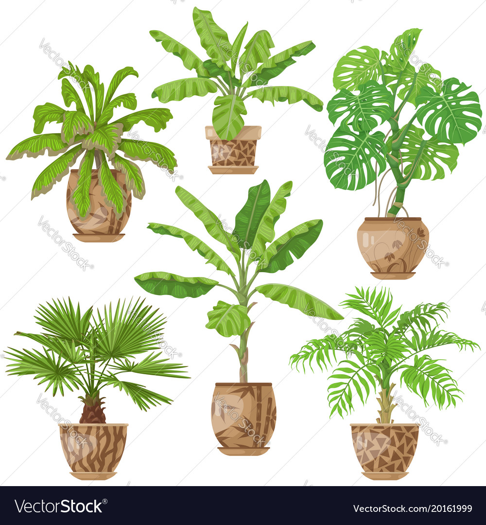 Potted Tropical Plants Set Royalty Free Vector Image