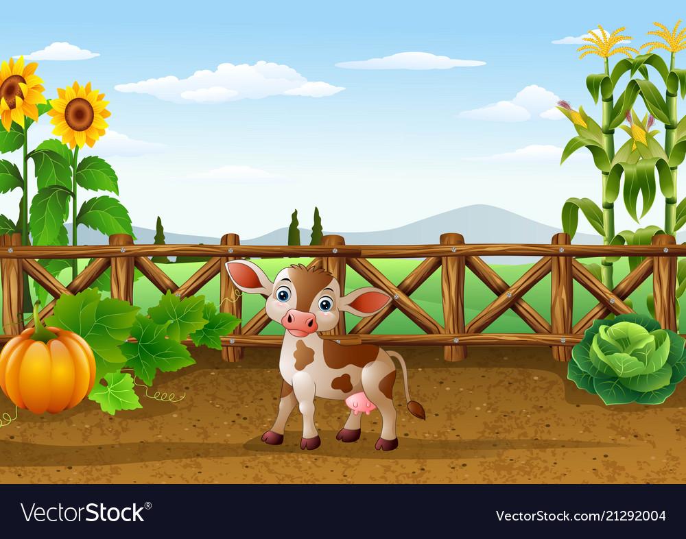 Cartoon cow in the farm