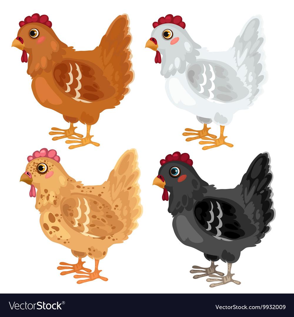 Cartoon chicken different colors animals