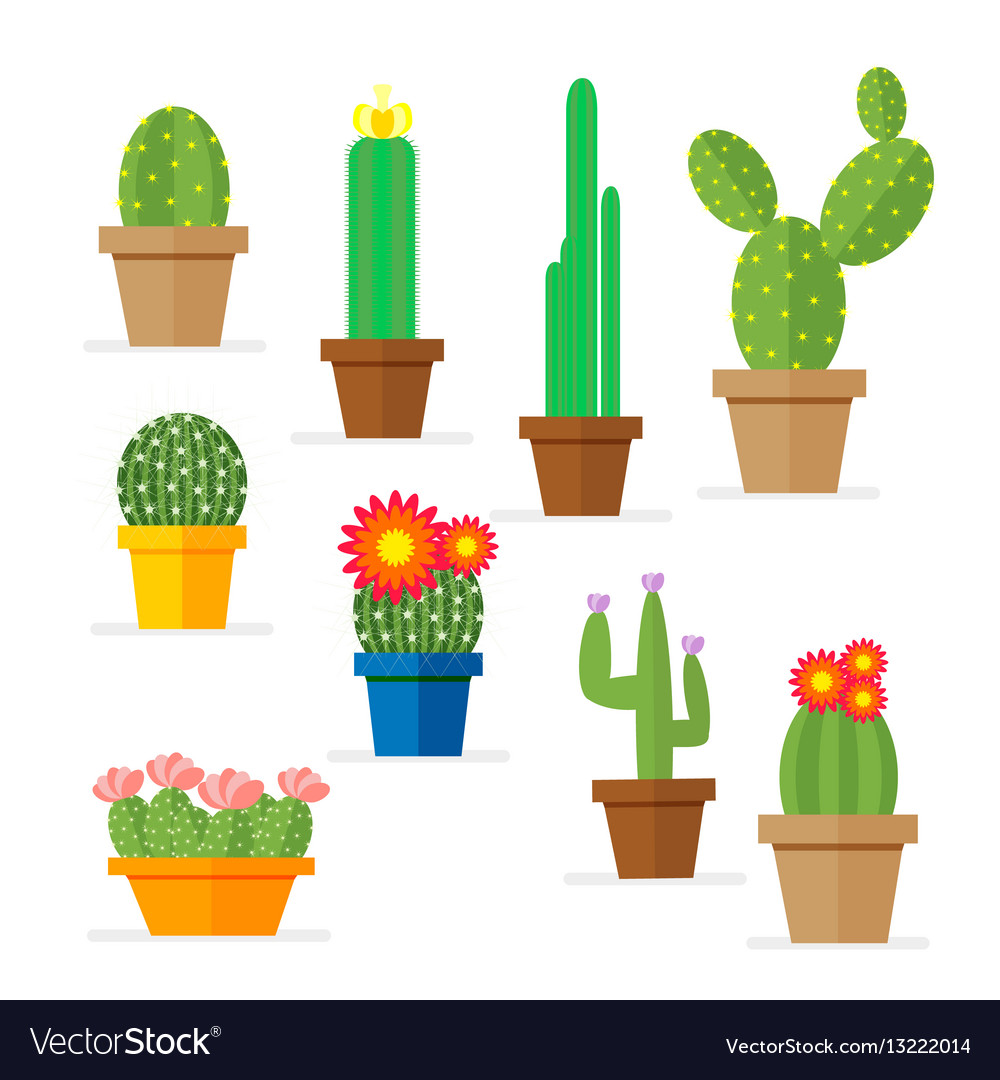 Set of cactus in a pot domestic plant with