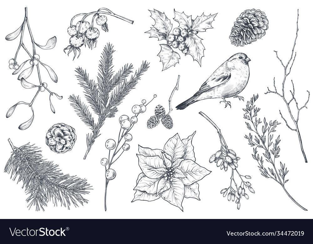 Collection natural christmas objects - plants