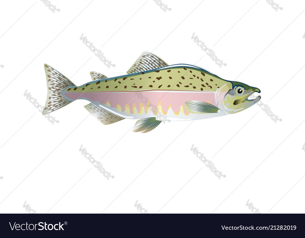 Pink salmon fish optimized from to