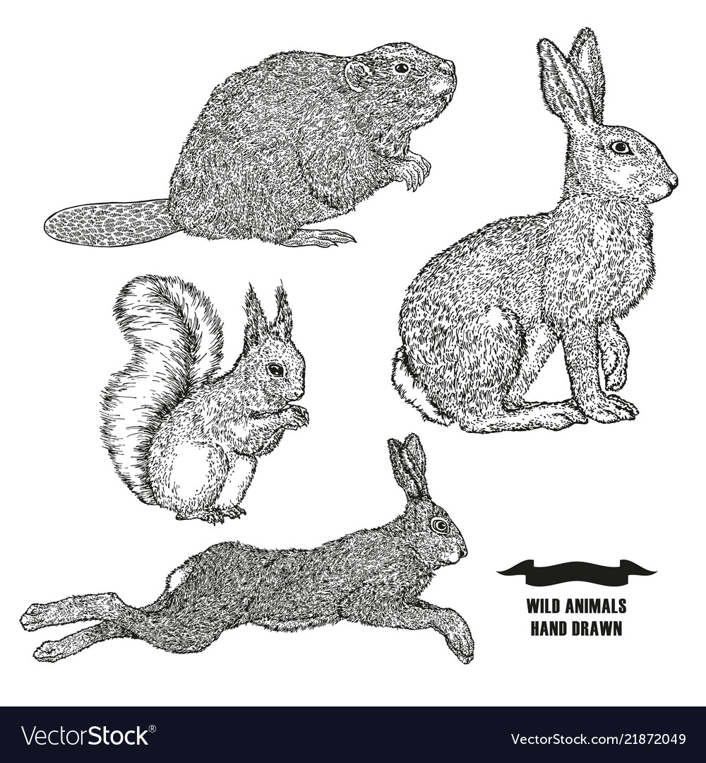 Forest animal hare rabbit beaver and squirrel