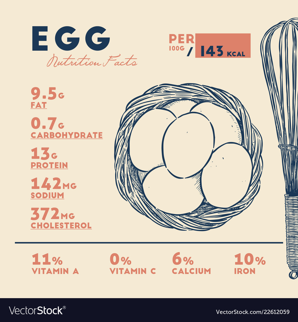 Nutrition fact of egg hand draw sketch
