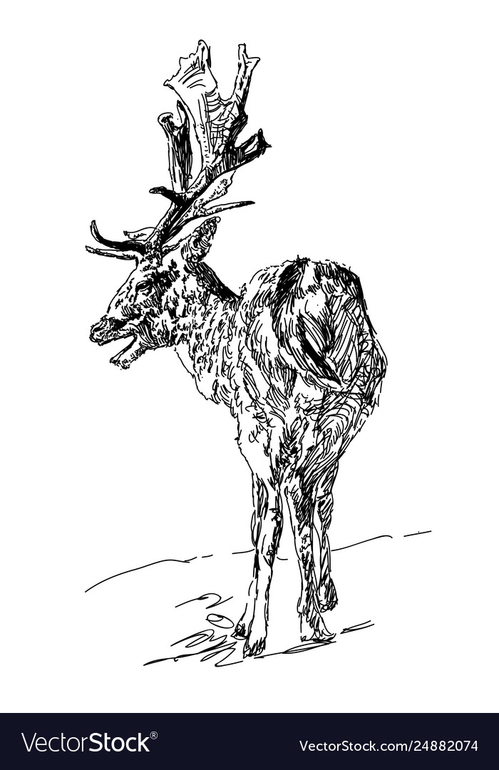 Forest deer with branchy horns in sketch style