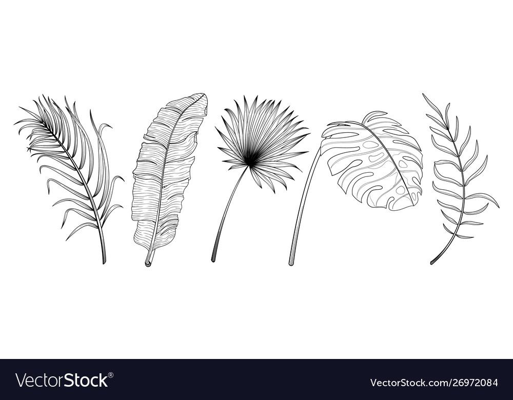 Tropical leaf hand drawn set